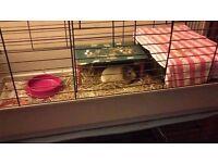 3 x rabbit cages