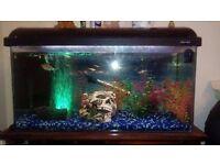2 Foot fish tank setup