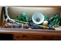 3ft vivarium with accessories