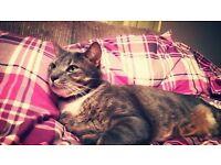 Lost Cat!!!