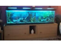5ft fish tank c/w stand and all accessories needed