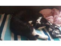 Lost female cat clumber street