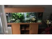 5 FT JEWEL RIO 450 LITRE FISHTANK WITH CABINET