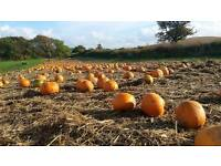 Spookley Pumpkin Festival at Apley Farm Shop