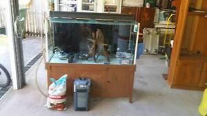 Custom Fish tank Lawnton Pine Rivers Area Preview