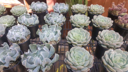 Succulents sale