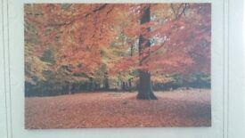 Autumn canvas