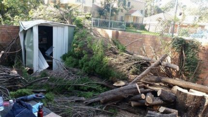 FREE - Pine Trees for Mulch Yagoona Bankstown Area Preview