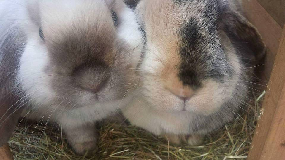 Two rabbits - Ralph and Slippers