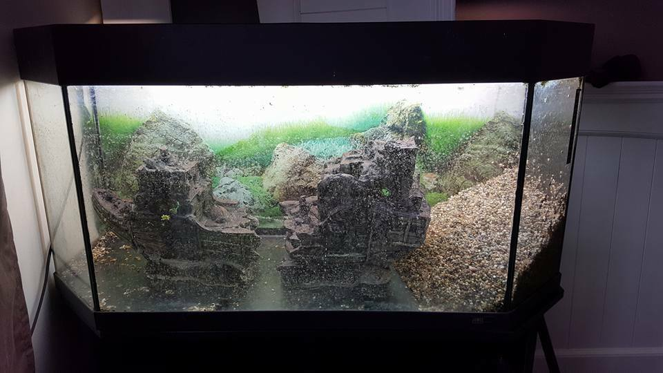 Juwel panorama 100 fish tank 170 litres in cambridge for Aquarium 80 litres