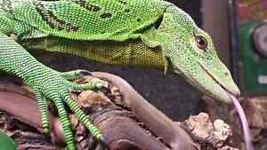Don't spend your days inside! Drop by Reptile Store.ca!