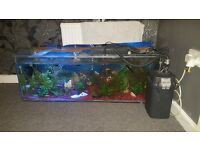 4ft by 2ft fish tank