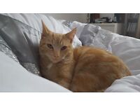 Missing Tim 7 months old much loved family pet