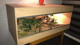 Corn Snake and Vivarium Complete Excellent Condition £150 ovno