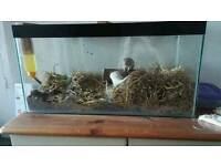2 female gerbils and tank
