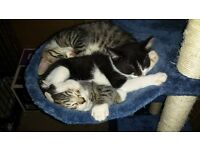 Rescue Mummy cat and kitten looking for 5* forever home