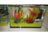 2FT Fish Tank x 2 plus gold fish and accessories