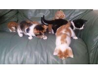 Small Kittens!