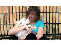 Dog/Cat Day Care & Dog Walking