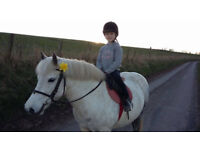 *PONY FOR LOAN* 12.2 grey mare confidence giver!