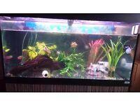 Fluval Roma 200 aquarium fish tank with stand, fluval water pump and heater