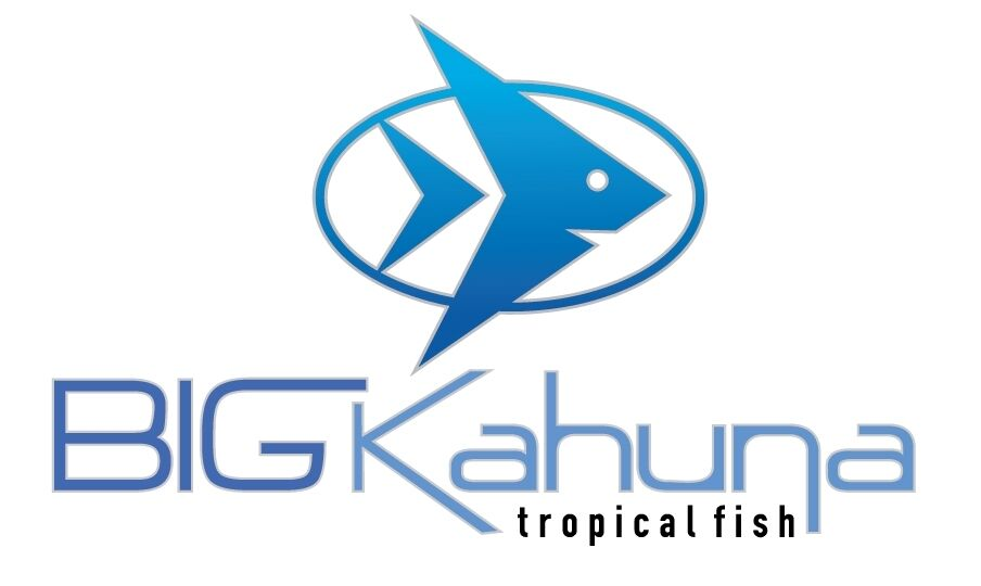 Big Kahuna Tropical Fish