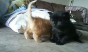 Free kittens that need homes!