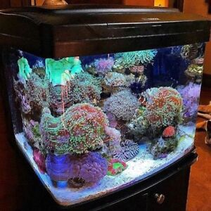 Services  Aquarium : Nettoyage Reparation Design