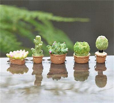 Miniature Succulents Pot Dollhouse Garden Craft Fairy Bonsai DIY Decor ♫
