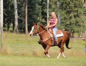 Tennessee Walker/Paint cross Gelding
