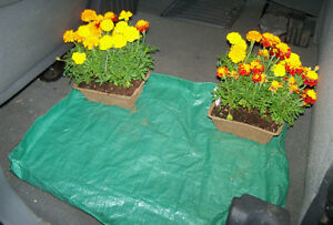 Plastic mat to keep your car clean when hauling plants 3/$5.00!
