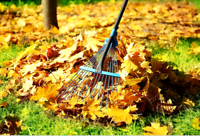 Fall cleaning (Brampton)