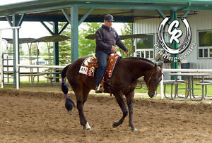 Are You Looking For A Horse Trainer, Coach or More?