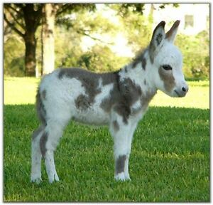 MINIATURE SPOTTED DONKEY