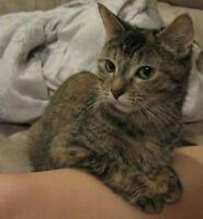 "Young Female Cat - Domestic Short Hair: ""Pretty Girl"""