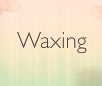 ladies wax only (Full body Wax $60)