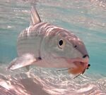 bonefishtradingco
