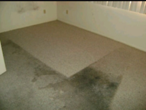Carpet & House or Tile Grout cleaning call or text