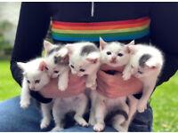 Beautiful Farmhouse Kittens