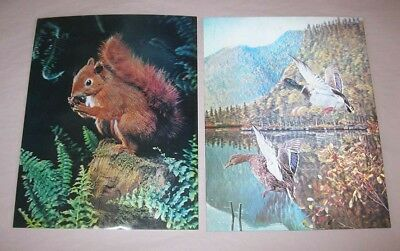 Vintage 1960s Lenticular Photo 3-D Red Squirrel Mallard Ducks Wonder Co. Japan