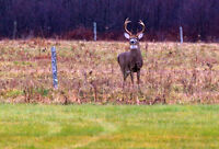 Book early for deer hunting