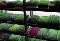 Order microgreen online. Bring the health and fresh to your home