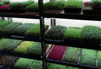 MICROGREENS at 50% of retail prices
