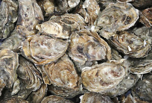 10 Acre Mussel Seed / Oyster Lease