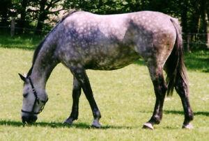 Horse Boarding for 1 Gelding.