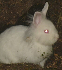 WANTED- RABBITS who need a home-h