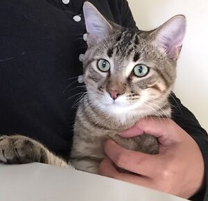 Beautiful Cat looking for a Home(Free)
