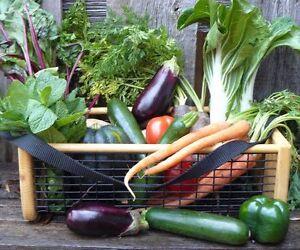 ==>GARDEN HOD <== Harvest Basket ~MANY OTHER USES~