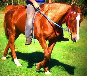 BARDOT: SWEET, AFFECTIONATE, PLACID, FUSS FREE BEGINNERS HORSE Elimbah Caboolture Area Preview