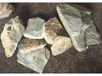 Reptile Rocks Decor